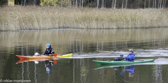 Action at the river (aixcracker) Tags: river  joki porvoo borg suomi finland october oktober lokakuu autumn hst syksy nikond3 vesi vatten water