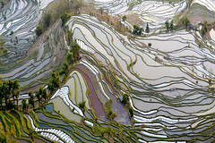 Rizires Yunnan 00067 (ichauvel) Tags: riziresenterrasse riceterrace ricepaddies ricefield graphisme graphism photography photo beautyofnature beautdelanature eau water geomtrie geometry winter hiver arbres trees jour day exterieur outside culture hani chine china asie asia voyage travel yunnan yuangyuang