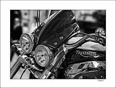 TRIUMPH (Ojitos) (tmuriel67) Tags: motorbike moto superbike custom triumph classicbike blancoynegro blackwhite bw 85mm18 nikon motor motorcycle thunderbird