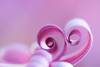 African Daisy Abstract... (glendamaree) Tags: macro pink petals nature abstract nikon d750 pastle flower africandaisy