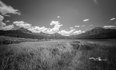 williams creek reservoir - black and white (Cathy Neth) Tags: 1424mm 2016inphotos 365photoproject 365project flowermoundphotographer flowermoundphotography sanjuannationalforest aspen aspentrees beautifullandscapes bluesky cathyneth cathynethphotography circularpolarizer cnethphotography colorado coloradolandscapes d810 exploringtheforest forestphotography forestroad intotheforest lake lakephotography landscape landscapephotography landscapes leefilters mountainphotography mountains nature naturesbeauty nikon nikond810 pagosasprings pagosaspringscolorado pine pinetrees project365 rollingwhiteclouds sanjuanmountains treephotography trees whiteclouds whitepuffyclouds williamscreekreservoir