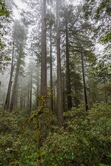 Prairie Creek Redwoods 25 (ssiegel16) Tags: prairiecreek redwoods