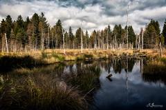 werdensteiner moor (Ronny Gbler) Tags: moor moos bume baumstamm ruhe erholung gesundheit wasser gras schilf wolken himmel reflektion