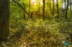 Bosque Encantado (cybersoftdesign) Tags: verde bosque hierba arboles contraluz resplandor nikon d5100 f18105mm