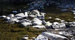 River Elz (tillwe) Tags: tillwe 201610 buchholz elz autumn river