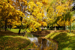 Autumn in Tavricheskiy garden (Suicidal_zombie) Tags: russia russie saintpetersburg stpetersburg autumn sunny golden beautiful water grass garden warm fall colourful color colors colours colour trees