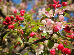 May Day (Andrew Buck) Tags: park spring cornwall blossom truro boscawen project365
