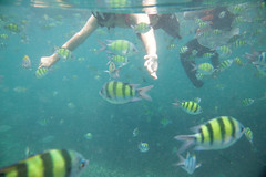 IMG_0855 (king.arm) Tags: trip travel sea vacation holiday fish elephant beach water coral thailand island boat amazing interesting underwater crystal getaway speedboat snorkelling tuktuk siam longtail krabi aonang tigerfish