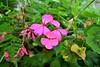 More Experimtations. (Eugene1959) Tags: myfrontyard experimentalshots flowersandmacros nikond3100 moreexperimtations