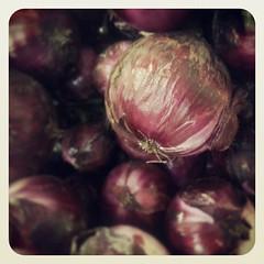 Cebollas de Guayonje, de lo mejor de Tacoronte