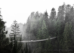 The bridge we must cross (insomnious247) Tags: trees fog vancouver vancouverbc capilanosuspensionbridge vancouverbccanada insomnious247 jaycarrieres jaycarrieresphotography thebridgewemustcross
