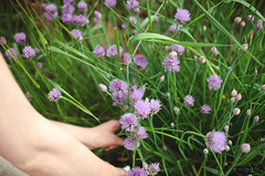 Chives (Simply Vintagegirl) Tags: food plant flower green garden season fry potatoes purple cut sidedish fresh meal castiron pick herb seasoning skillet