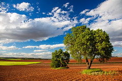 The poetry of earth (Alex Stoen) Tags: travel sky naturaleza verde green nature clouds contrast canon landscape geotagged flickr day open cloudy earth g happiness paisaje collection cielo nubes fields felicidad agriculture bliss naturalbeauty cereales cuenca smugmug facebook stiched tierra expanse redland fertile castillalamancha fertilidad polarizingfilter greenfields fav10 fav25 filtropolarizador ef24105f4lisusm 500px canoneos5dmarkii 5dmk2 alexstoen alexstoenphotography compositionexercises viajeconjbruiz torrubiadelcastillo