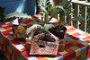 Anniversary present (*Susie*) Tags: table terrace driftwood colourful artichokes anniversarypresent tojohn