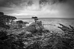 The Lone Cypress (AllardSchager.com) Tags: ocean california statepark blackandwhite bw cliff usa seascape tree water monochrome beauty clouds america landscape bay spring nikon rocks symbol zwartwit unitedstatesofamerica shoreline scenic dramatic surreal landmark icon pacificocean impact pebblebeach april 17miledrive pacificgrove amerika neverland montereycypress vignetting lente iconic breathtaking californie zw baai macrocarpa thelonecypress tollroad montereypeninsula 2013 horizonoverwater d700 nikond700 nikkor2470mmf28 nikonfx allardone allard1 allardschagercom