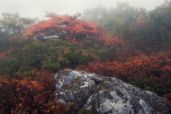 Autumn Bonsai (Appalachian Hiker) Tags: dollysods fall autumn tree fog mist