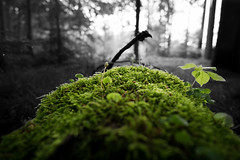Green Green Green (ptrckmayer) Tags: outdoor forest wald green grn baum tree grass nature landscape sony alpha samyang 12mm unscharf bokeh photoshop rain regen