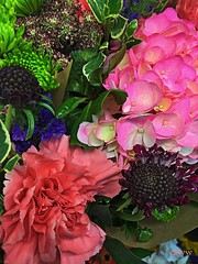 July Flowers (EDWW day_dae (esteemedhelga)) Tags: flowers plants nature beauty season botanical flora natural blossom cluster nursery parks natura creation passion vegetation bloom greenery bouquet annual bud botany horticulture rosette sprout seedling biennial perennial posy floret efflorescence juncture siring edww mothernature daydae esteemedhelga floeret greatmother damenature
