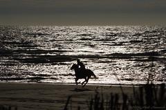 Belgian coast (Natali Antonovich) Tags: belgiancoast wenduine parallels nature silhouette reflection horse animals horsemen lifestyle water landscape portrait beach seashore seasideresort seaboard seaside
