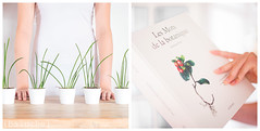 Les mots de la botanique (Jeanne {Baluche}) Tags: baluche diptych white
