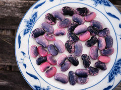 Scarlet runner beans are ready! (Dean Ruben.) Tags: scarlet runner beans gardening