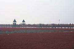 red beach num dia nublado (jubirubas) Tags: china panjin