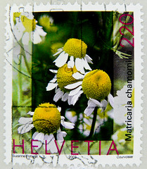 great stamp Helvetia 220c Chamomile (Matricaria chamomilla, Echte Kamille, Camomille sauvage, manzanilla de Castilla, Рома́шка апте́чная, 德國洋甘菊, Camomila-vulgar, Papatya)  Switzerland timbres Suisse Swiss Schweiz Briefmarke porto francobolli Svizzera (stampolina, thx for sending stamps! :)) Tags: stamps helvetia swiss switzerland schweiz postage porto briefmarke postetimbre timbres francobolli bollo bolli sello selo timbre sellos briefmarken 邮票 yóupiào марка почтоваямарка revenue пощенскиразноски frimærker templite ταχυδρομικάτέλη 送料 우편요금 poštarina paštoišlaidos wysyłka frimärken маркица pečiatky ค่าไปรษณีย์ pullar poštovné bélyegek postes frimaerke timbreposte postestimbres green grün أخضر 绿色 зеленый 緑 verts yeşil verde हरा สีเขียว πράσινοσ zöld 녹색 zielony 切手 timbru postapulu pulu timbresposte kamille matricariachamomilla echtekamille camomillesauvage manzanilladecastilla рома́шкаапте́чная 德國洋甘菊 camomilavulgar papatya chamomile