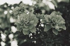 D (elleiriem) Tags: nature natura dettagli cose casuale flowers fiori bw bianco e nero