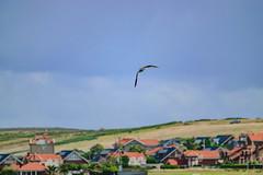 18092016DSC_1148.jpg (Ignacio Javier ( Nacho)) Tags: facebook gaviotas aves flickr pginafotografia faunayflora santander cantabria espaa es