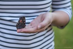 We're all a little fragile... (CarolienCadoni..) Tags: sonyslta99 sal2470z butterfly dof stripes hand bokeh
