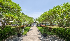 Frangipani-lined Path Leading to Swimming Pool (La Residence Hue Hotel & Spa - MGallery by Sofitel) Tags: frangipanilinedpath frangipanis plumeria laresidencehuehotelspa mgallerybysofitel accorhotels hueluxuryhotel luxuryhotelinhue luxuryhotels huecity vietnam