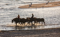 Horses early in the morning (Wolfgang-Weber) Tags: wolfgang weber water horses pferde mwen sonne morgensonne sunrise beach strand reflection reflexionen braun brown photography photo
