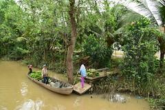 Mekong Delta (Alguay) Tags: vietnam mekong delta palm palmier bananier banana tree fleuve river south sud