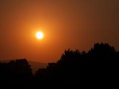 (turgidson) Tags: panasonic lumix dmc g7 panasoniclumixdmcg7 panasonicg7 micro four thirds microfourthirds m43 g lumixg mirrorless x vario 35100mm 35100 f28 hhs35100 telephoto zoom lens panasonic35100 panasoniclumixgxvario35100mmf28 silkypix developer studio pro 7 silkypixdeveloperstudiopro7 raw bray wicklow ireland p1040363 sun sunset sky evening september orange tree trees foreground