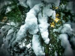 12558916_522688134599713_1366704998_n (dragica_basaric) Tags: winter snow wonderland magic magical snowy flake nature green colours streets treet postcar postcards love train phot january 03 2016 photo photography d b danchy92 dragicabasaric lapovo serbia srbija srb sumadija dbphotography