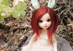 new girl (Sparrow ) Tags: pukifee realfee hybrid bunny fairyland bjd abjd