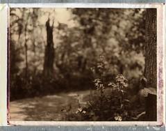 (er_code_blue) Tags: polaroidweek packfilm analog instant expired film chocolate 195 polaroid