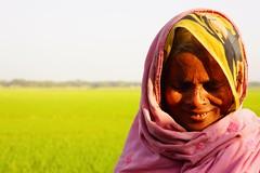 Shy Smile (Meetin' the world) Tags: women bangladesh durgapur smile shy green rice paddy people muslim asia bangladeshi