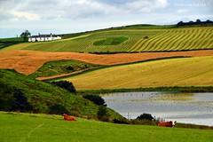 (Zak355) Tags: rothesay isleofbute bute scotland scottish farming farm