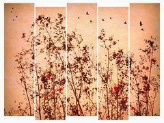 Early autumn crepe myrtle. (jeanne.marie.) Tags: warm autumn silhouettes texture birds pink floweringtrees panels iphone5s iphoneography crepemyrtle