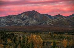 Denali National Park Dusk (Cole Chase Photography) Tags: denali alaska autumn denalinationalpark dusk rose pink fall canon eos5dmarkiii