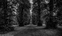 Through the trees (sarahmcomish) Tags: hdr trees westonbirt autumn blackandwhite monochrome arboretum nature outdoor landscape