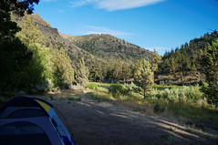 a contender (rovingmagpie) Tags: oregon prineville lowercrookedwildandscenicriver crookedriver postpilecampground postpile campsite camping river canyon touregon summer2016