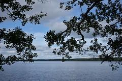 (Villikko) Tags: lake jrvi tree trees puu maisema landscape