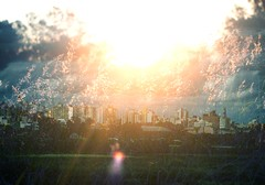 (doodaduda) Tags: cidade urbano film lookslikefilm flower nature art sun city canon pelotas