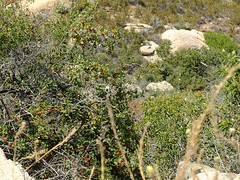 USA-2016_Tecate Peak, San Diego County (Robert, Regina + Yvonne S. aus W.) Tags: usa2016 usa kalifornien california amerika america sandiegocounty grenze grenzbefestigung zaun absperrung border flora fauna vereinigtestaaten mexiko mexico trocken hitze wste desert tecate jacumba tecatepeak dirtroad