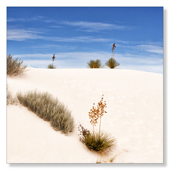 White Sands, New Mexico (Northern Pike) Tags: whitesands newmexico