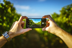PiP - Picture in Picture (ChrisTalentfrei) Tags: bokeh iphone7 apple sigma art 35mm fullframe dof deptoffield pov bokehlicious sony a7ii a7m2 ilce7m2 bild wineyards weinberg herbst autumn fall october oktober bokehfull