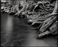 Roots and invisible water (koni-omegaman) Tags: blackandwhite mamiya film fuji pinhole hudson wi acros rb67 10minutes lakefrontpark ddx bodycap ei80 f288