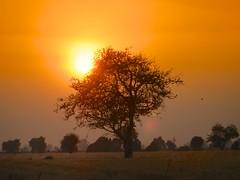 SUNSET WITH BIRD (NIKONIANO) Tags: en paisajes rural mexico árboles surreal paisaje el amanecer campo atardeceres michoacán michoacan zamora bruma tranquilidad supershot enelcampo anawesomeshot atardecerenelcampo mexicanlandscape zamoramichoacan paisajemexicano sergioalfaro zamoramichoacán michoacánrural marcoantoniowencecárdenas laluzmichoacán atardeceresenmichoacán árbolconpájaro